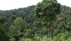 Nâng cao bền vững cho rừng tự nhiên
