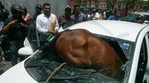 Nắng nóng 43 độ C, ngựa nổi điên lao đầu vào ôtô