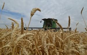 Nga viện trợ gần 4.000 tấn lúa mì hỗ trợ Triều Tiên đối phó hạn hán