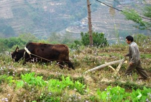 Ngân Sơn (Bắc Kạn): Băn khoăn từ những quyết định thu hồi đất rừng