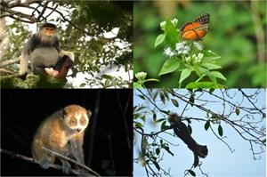 Ngày quốc tế đa dạng sinh học 22-5: Cần thống nhất một đầu mối quản lý