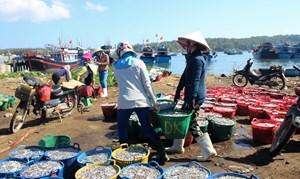 Ngư dân trúng đậm cá cơm đầu năm