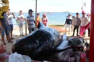 Người dân làm lễ an táng cá voi 7 tạ dạt vào bờ