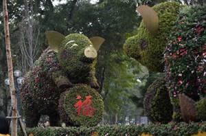 Người dân thích thú chụp ảnh với 'chú heo vui vẻ' làm bằng hoa lập thể khổng lồ