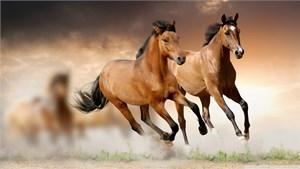 Những giống ngựa đặc biệt