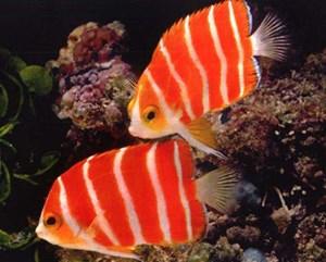 Những loài cá độc đáo