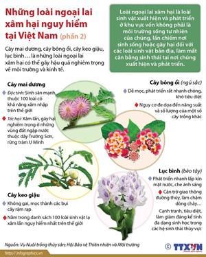 Những loài thực vật ngoại lai xâm hại nguy hiểm tại Việt Nam
