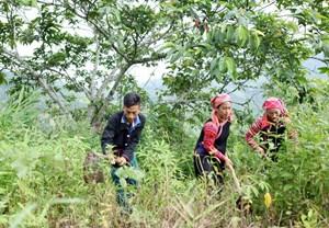 Nỗ lực bảo vệ rừng