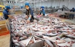 Nỗ lực tìm thị trường mới cho cá tra
