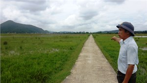 Nông dân bỏ ruộng ở Thanh Hóa - Kỳ I: Khi 'tấc đất' không còn là 'tấc vàng'