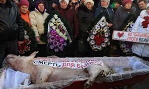 Nông dân tổ chức đám tang cho... lợn