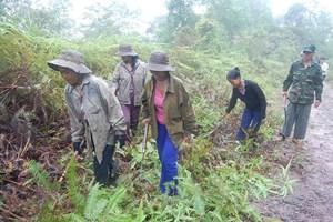 Đàn voi  7 con xuất hiện ở Quảng Nam