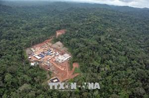 Peru mất hàng chục nghìn ha rừng Amazon
