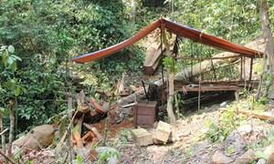 Phá rừng ở Bắc Trà My: Tỉnh chỉ đạo kiểm lâm làm rõ