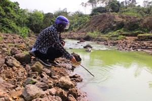 Phạt 55 triệu đồng hai trang trại gây ô nhiễm
