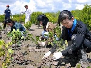 Phát động 'Tết trồng cây' nhân dịp Xuân Đinh Dậu 2017