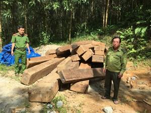 Phát hiện 24 phách gỗ xoan đào cất giấu ở bìa rừng
