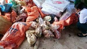 Gần 1,2 tấn thực phẩm 'quá đát' trong kho đông lạnh