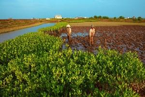 Phát triển bền vững đồng bằng sông Cửu Long