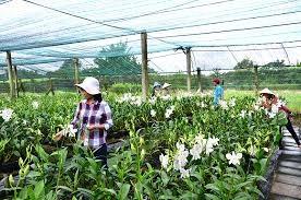 Hiệu quả từ phát triển nông thôn bền vững vì người nghèo