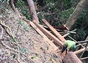 Quảng Bình: Phát hiện thêm một vụ phá rừng nghiêm trọng