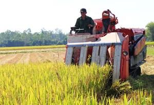 Quảng Nam: Bà con phấn khởi vì được mùa lúa vụ Đông Xuân