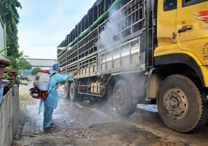 Quảng Nam: Dịch tả lợn châu Phi lây lan tới huyện miền núi Nam Giang
