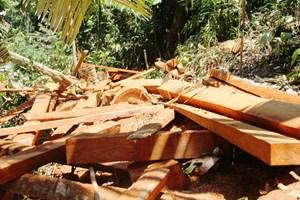 Quảng Nam: Sẽ xử lý nghiêm vụ phá rừng phòng hộ Trà Leng