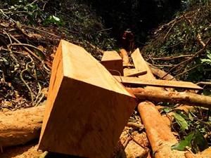 Quảng Nam: Sẽ xử lý vụ phá rừng tự nhiên tại huyện Nam Giang