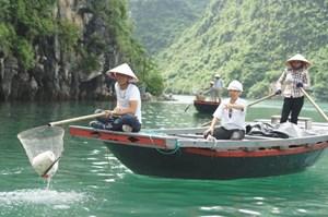 Quảng Ninh: Làm sạch môi trường  Vịnh Hạ Long