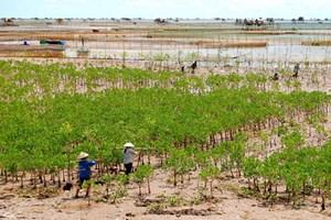 Quy hoạch trồng rừng phòng hộ ven biển