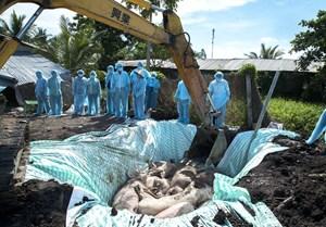 Quyết liệt phòng, chống dịch tả lợn châu Phi