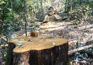 Rừng phòng hộ Nam Cát Tiên bị xâm hại: Kỷ luật 3 cán bộ bảo vệ rừng