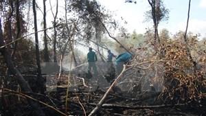 Rừng tràm U Minh Hạ báo cháy ở cấp cực kỳ nguy hiểm