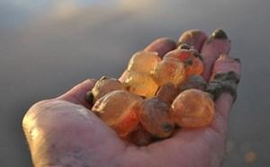 Sinh vật lạ giống thạch dẻo dạt vào bờ biển Mỹ