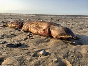 Sinh vật lạ trôi dạt vào bãi biển sau cơn bão