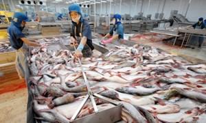 Số phận con cá tra trước hội nhập