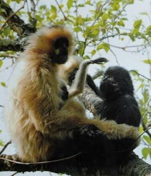 Sơn La có thêm khu bảo tồn thiên nhiên Mường La