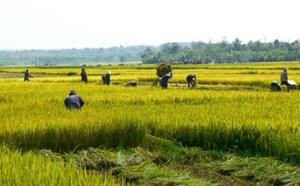 Sửa đổi quy định về miễn, giảm thuế sử dụng đất nông nghiệp