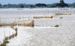 Tận diệt thủy sản mùa lũ