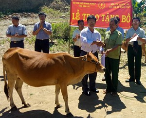 Tặng bò giống cho cựu chiến binh có hoàn cảnh khó khăn