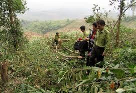 Tăng cường tuần tra, kiểm soát rừng