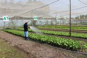 Tăng mạnh diện tích nuôi trồng hữu cơ