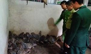 Tàng trữ 47 con khỉ, chồn đông lạnh trong nhà