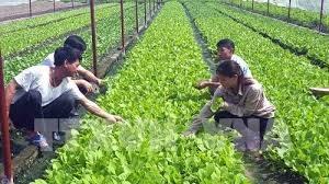 Tạo bước chuyển biến cho nông nghiệp