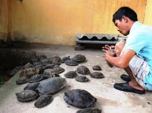 Tây Ninh: Tạm giữ 66 cá thể rùa nhập lậu
