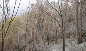 Tây Ninh: Trên 57.000ha rừng có nguy cơ cháy cao
