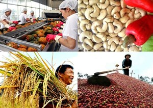 Thặng dư thương mại ngành nông nghiệp giảm 22%