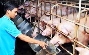Tháo gỡ khó khăn cho ngành chăn nuôi