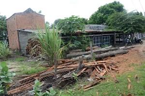 Thay thế việc dùng gỗ rừng tự nhiên sấy thuốc lá